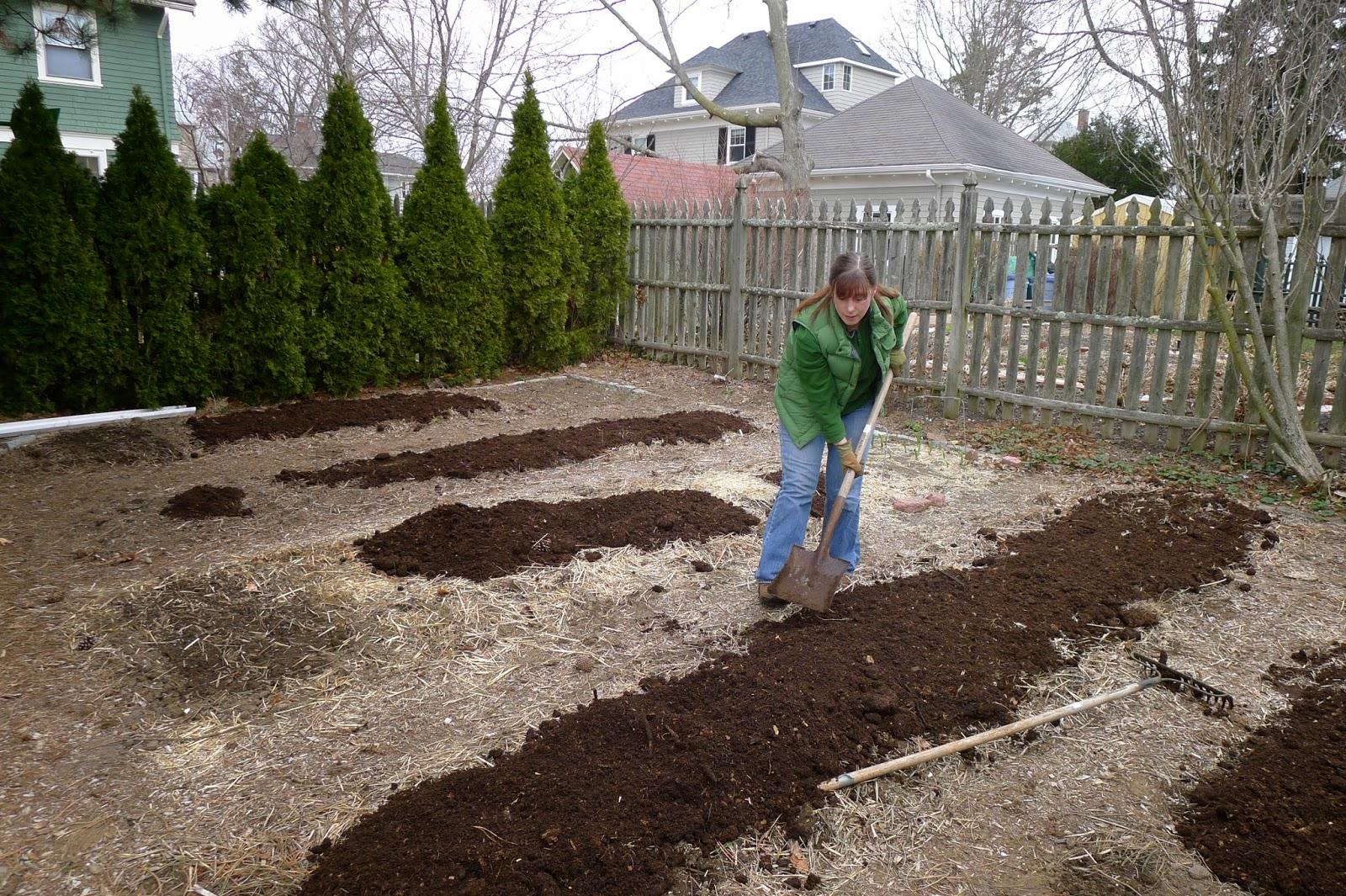 Using manure to fertilize vegetable beds