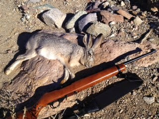rabbit hunting in the mojave
