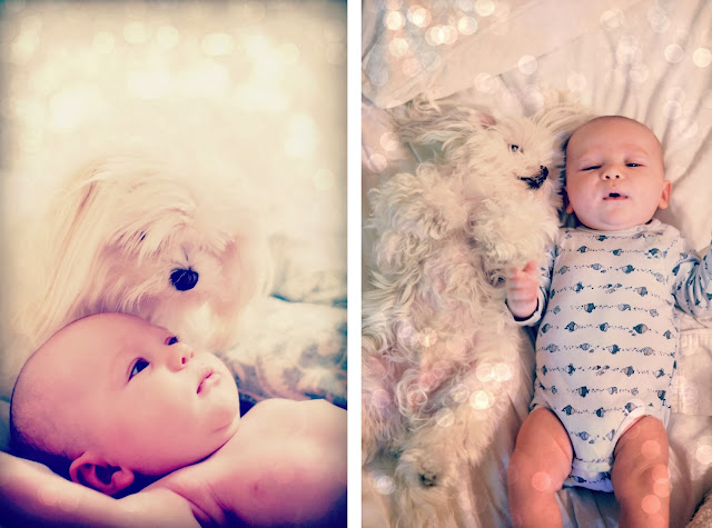 maltese and baby photography photos cute pictures