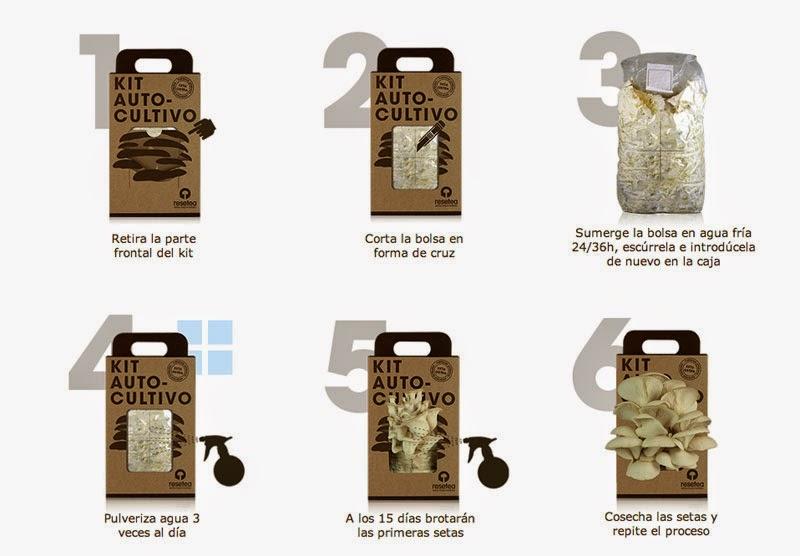 Cómo cultivar setas en casa