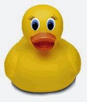 El pato te esta mirando