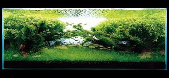 Von Stein Aquascaping Layouts E Estilos De Aqu 225 Rios Plantados