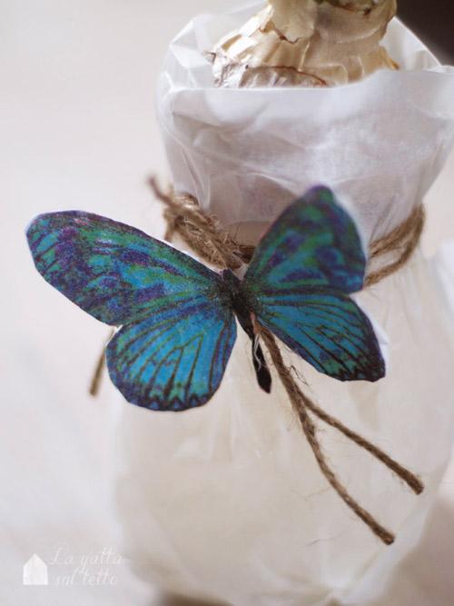 giacinto farfalla