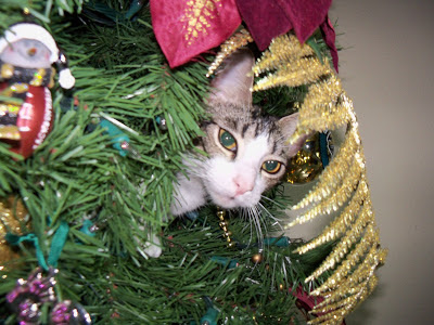 Trixie in the Christmas Tree