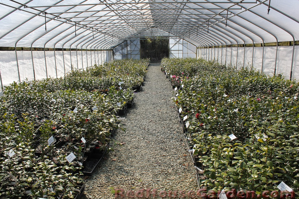 One Of The Greenhouses That Houses Many Camellia Seedlings