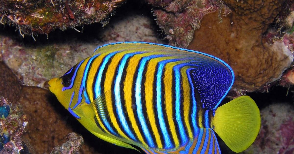 Vida marina peces de agua salada for Mantenimiento piscina agua salada