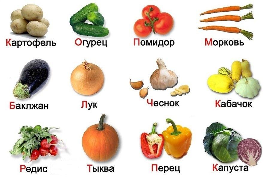 Картинки по запросу картинки овощи огород