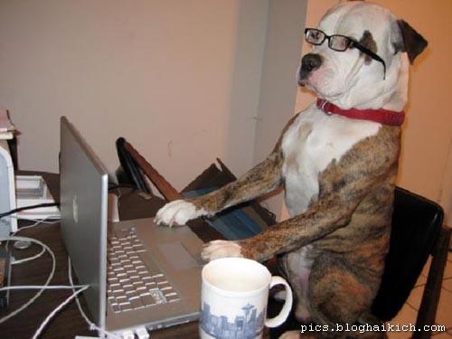 Chó đeo kính thật ngầu