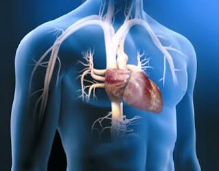 celulas madre corazon
