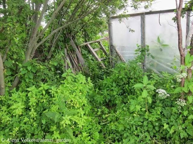 аленин сад, часть3, до, после, участок, дача, освоение участка, целина, сад, огород, старая теплица, ручей