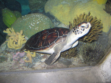 Aquarium - 17 mars