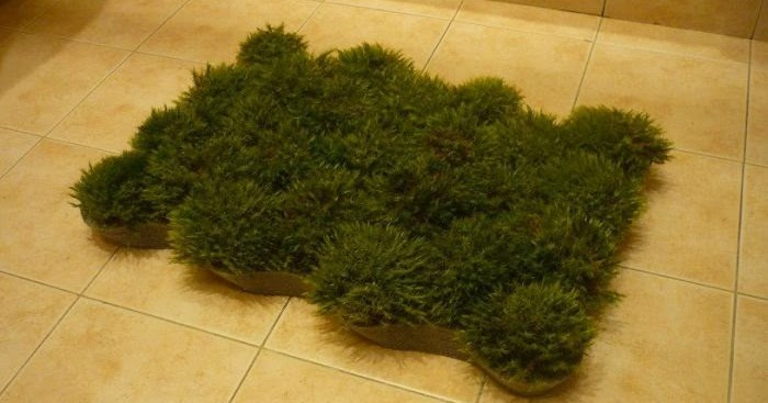 Diy un tapis en mousse v g tale initiales gg Mousse vegetale deco idees