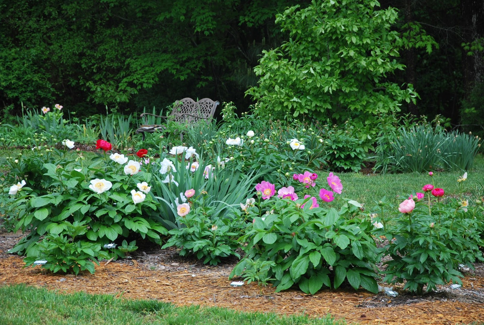 Landscaping Around A Group Of Trees : Peonies in the landscape garden bench