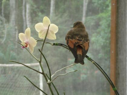 Resultado de imagem para passarinho triste