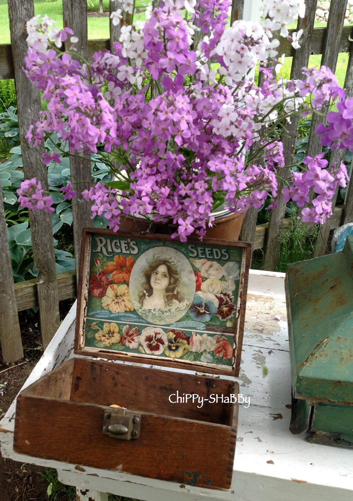 Chippy Shabby Back From Northwind Perennial Farm Antique