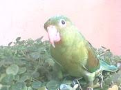 Este Blog es Precisamente por el cuidado de estas hermosas aves
