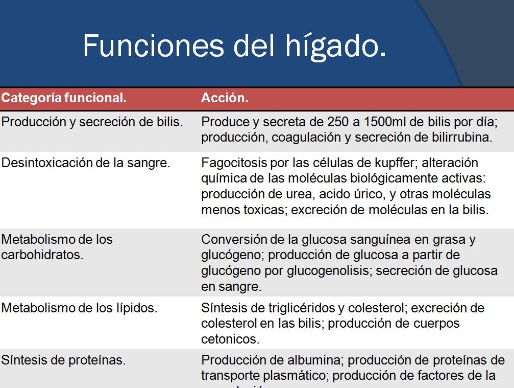 Contemporáneo Función Del Hígado Elaboración - Imágenes de Anatomía ...