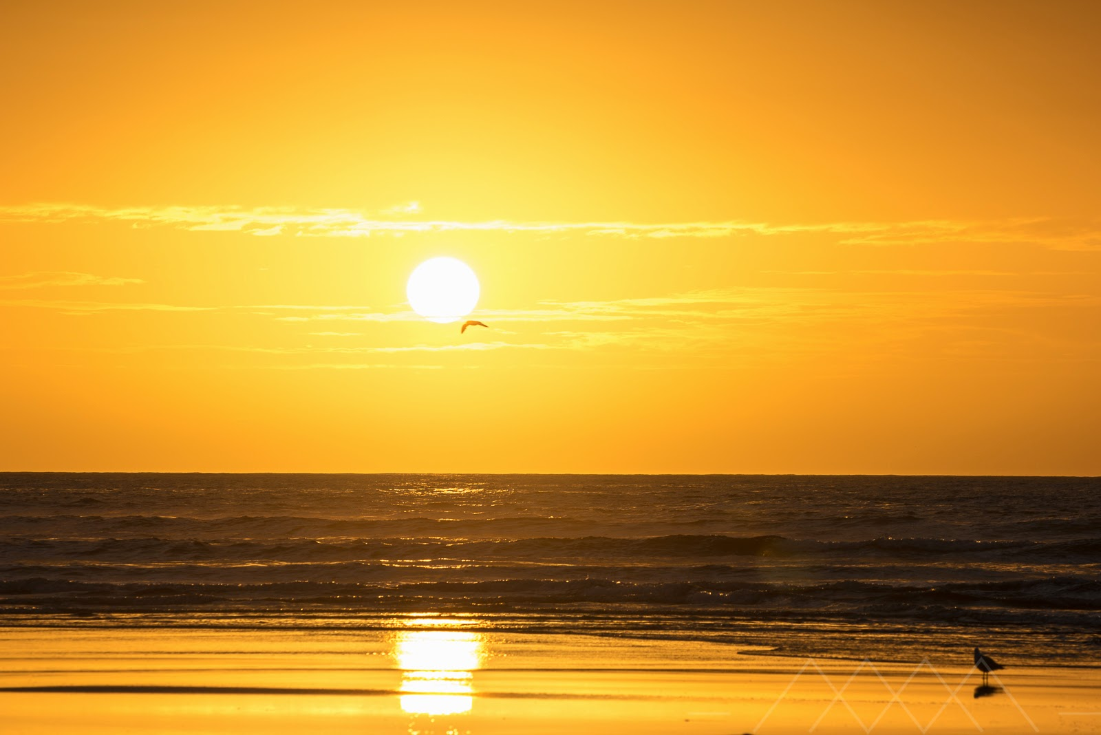 Sun setting and seagull New Plymouth