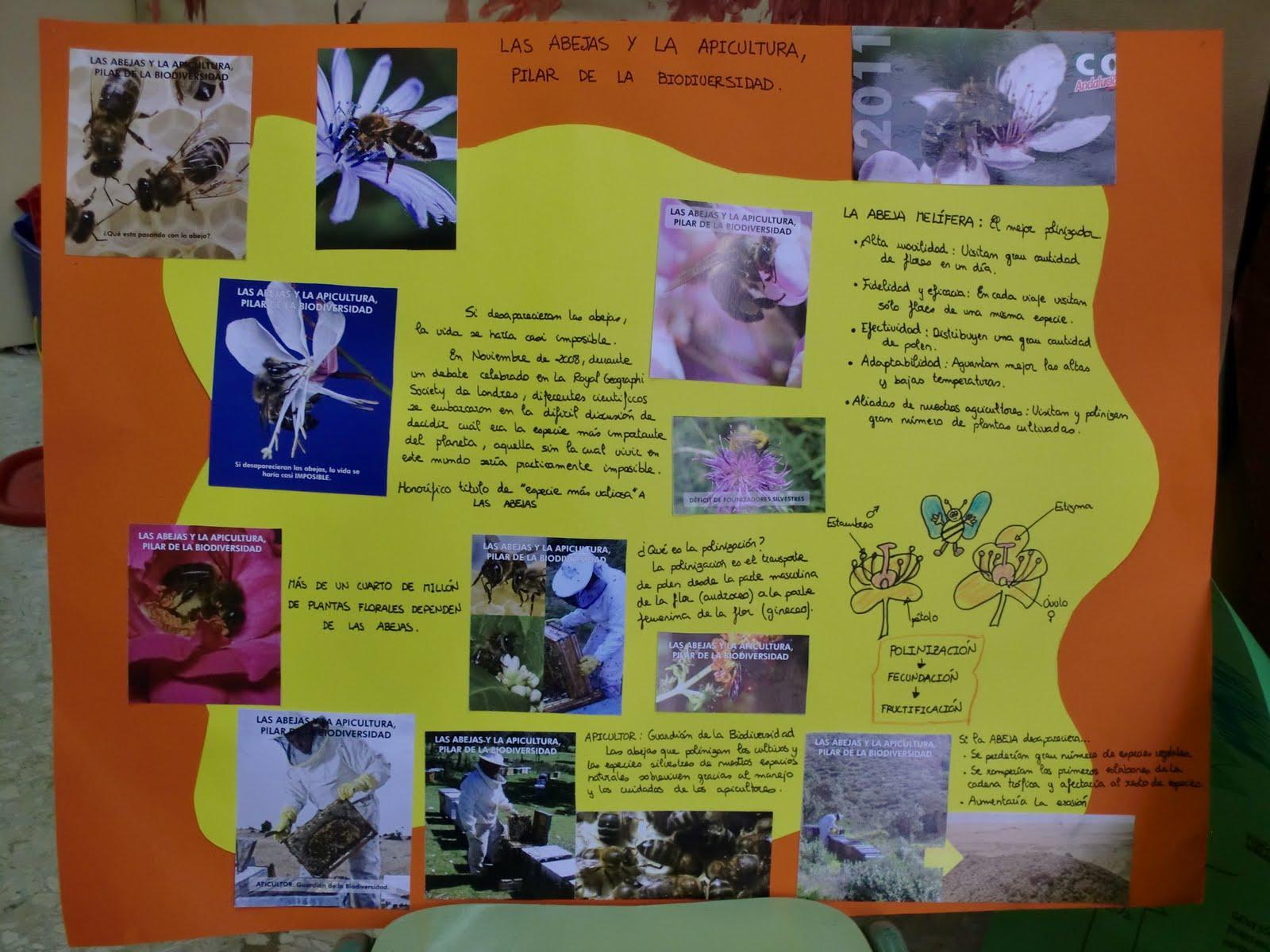 Proyectos En San Carlos Borromeo Las Miel Y Las Abejas