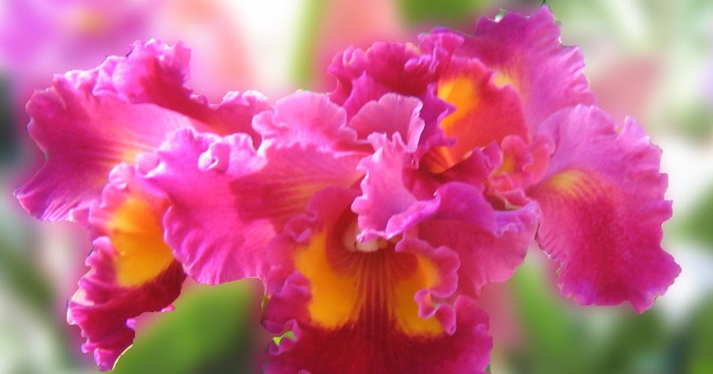 Niceorchids How Often Should I Water My Orchid