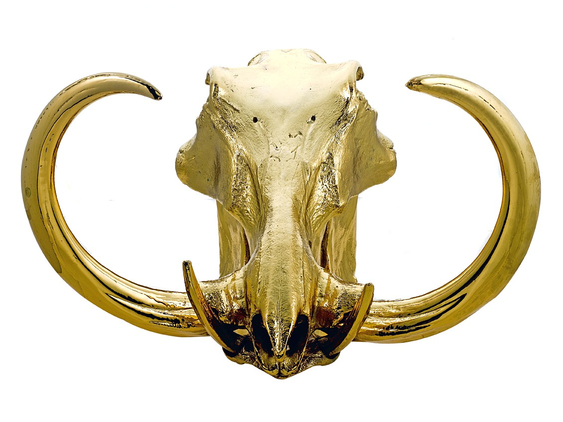 Gilding The Carnivore. Human and Animal Skulls Dipped In ...