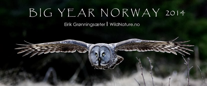 Big Year Norway 2014