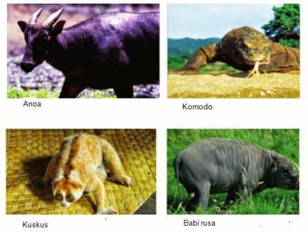 contoh fauna Indonesia bagian Tengah