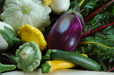 Squash and Eggplant Harvest with pattypan squash, zucchini and swiss chard