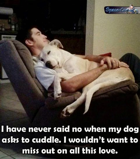 funny cute dog image