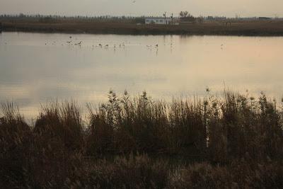 Bassa de les Olles in Delta de l'Ebre