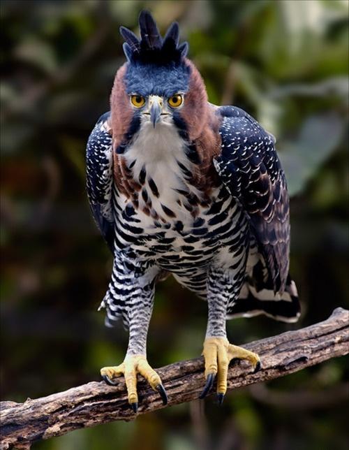 imagenes de animales exoticos del mundo - Los 10 animales más venenosos del mundo Animales y