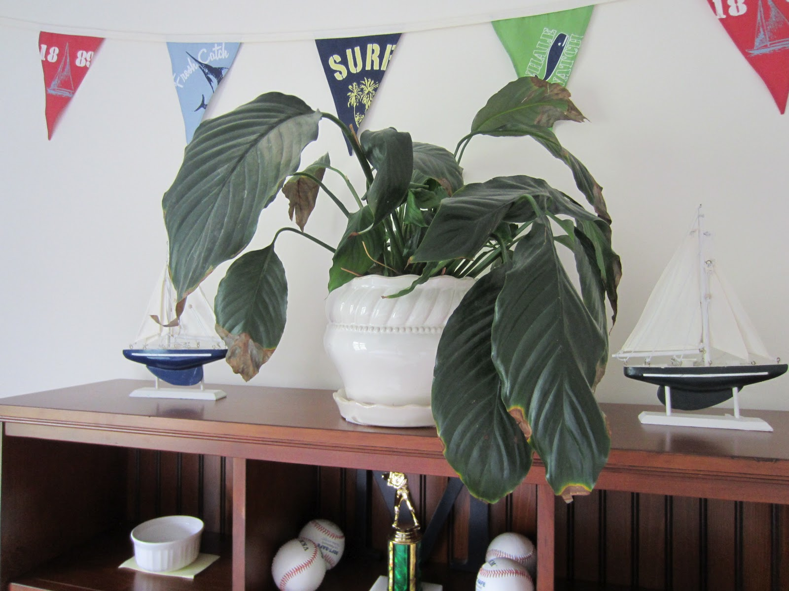 Houseplants such as Spider Plants Philodendron and Peace Lillies #6E473F