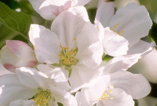 plantas cheirosas jardim ? Doitri.com
