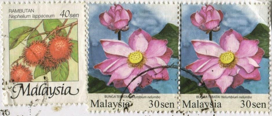 lotus, rambutan, nelumbium nelumbo, nephelium lappaceum