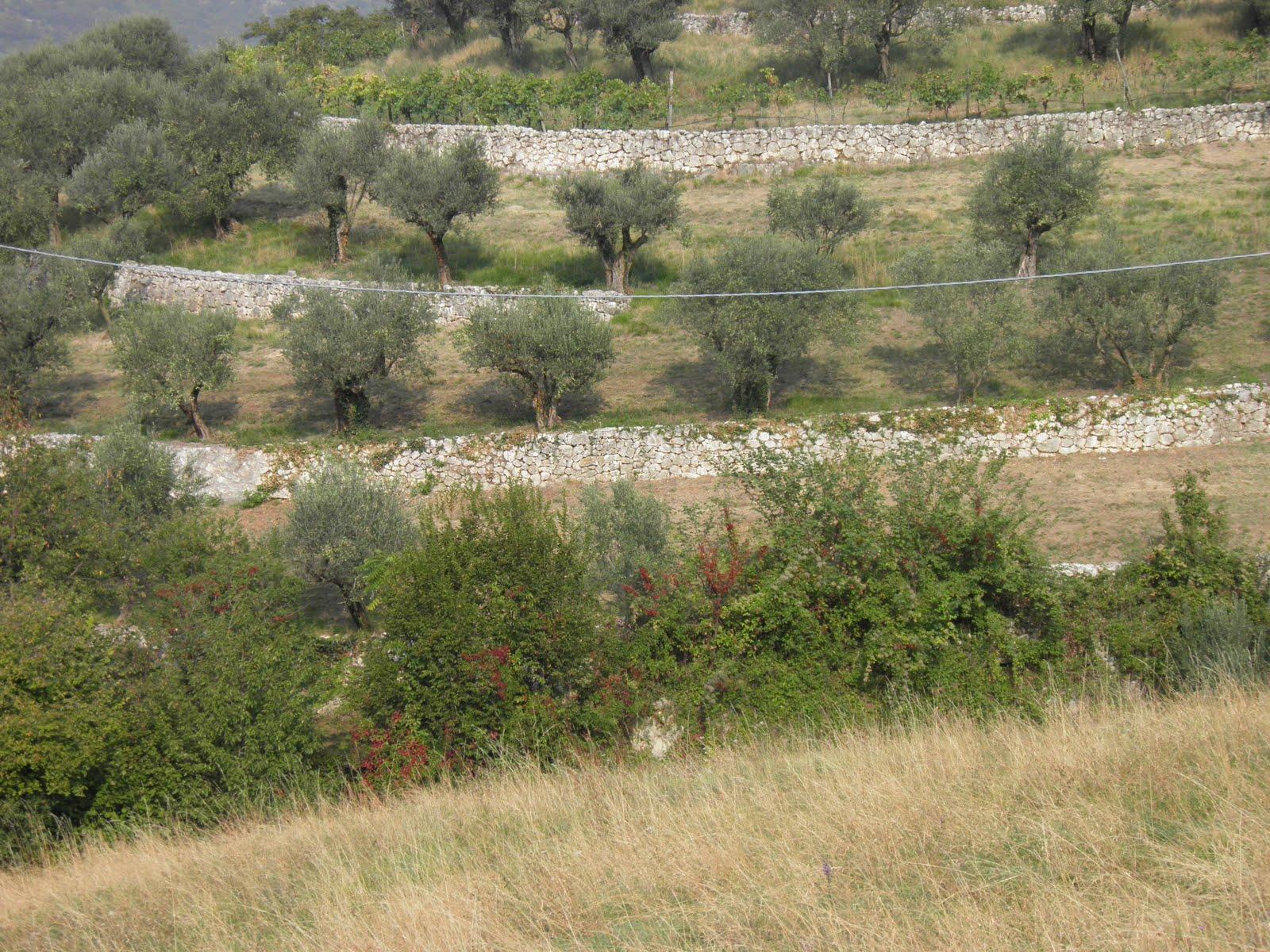 Sanoppe la collina alle spalle di verona e 39 abbandonata for Piani di serra in collina