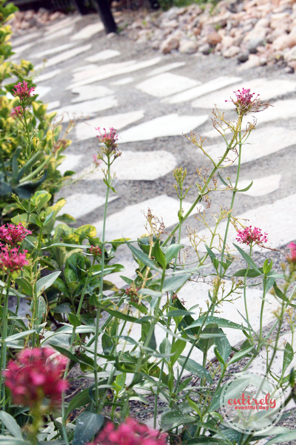 How to make an EASY DIY Flagstone Garden Path. Click for step-by-step tutorial. www.entirelyeventfulday.com #garden #landscape