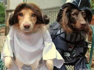 Cães vestidos a rigor