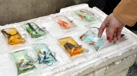Diversos tipos de animais marinhos são vendidos em chaveiros na China