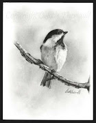 Black Capped Chickadee sketch/drawing in pencil