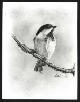 Black Capped Chickadee sketch/drawing in pencil by Wildlife Artist Colette Theriault