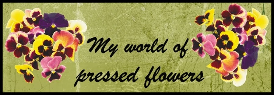 Moj cvetni svet - My world of pressed flowers