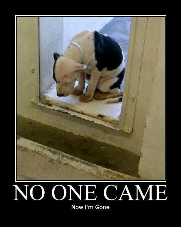 Dogs To Adopt At Spca Miramichi