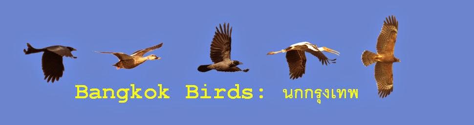 Bangkok Birds: นกกรุงเทพ