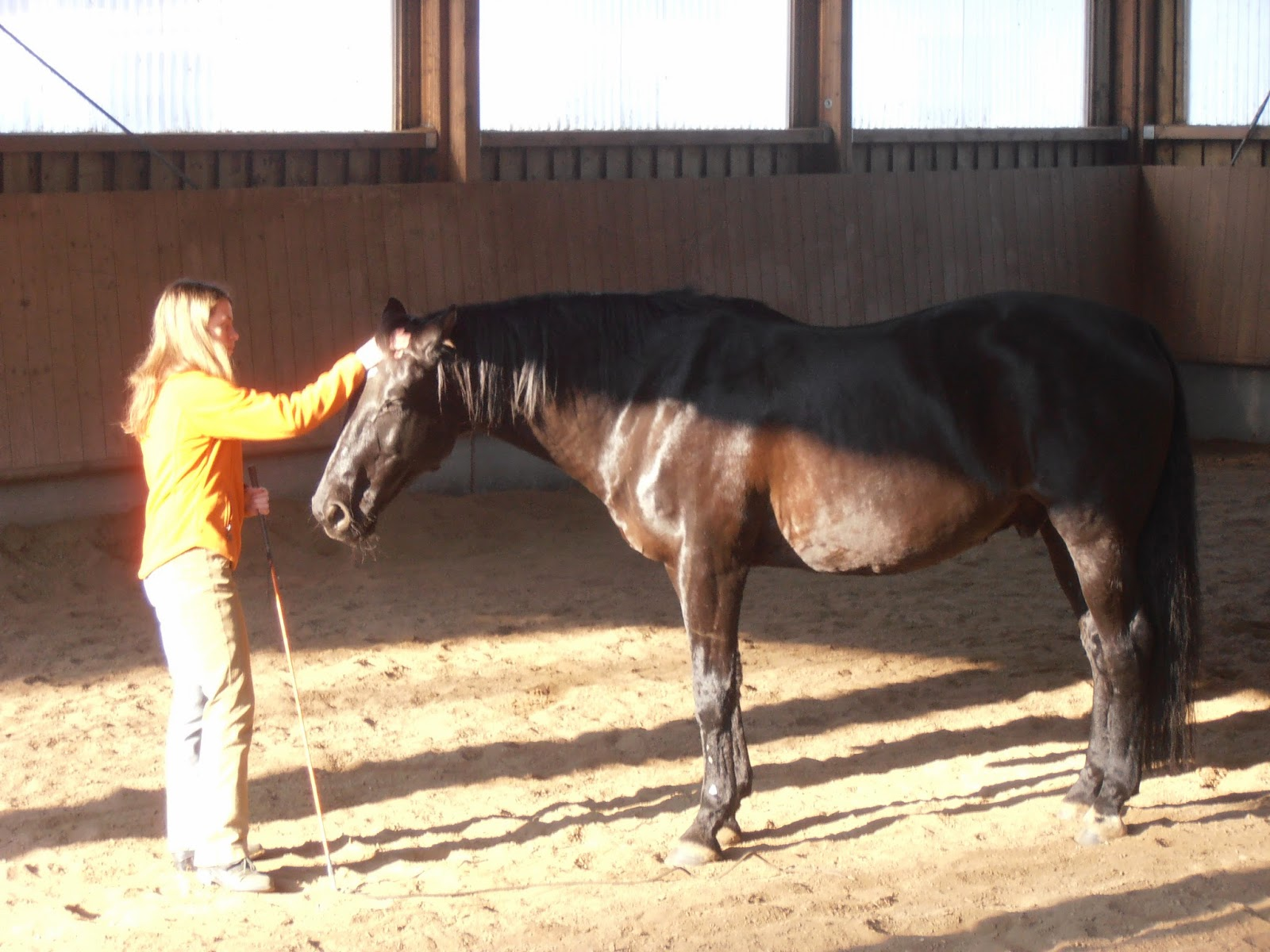 beingwithorses, chillen