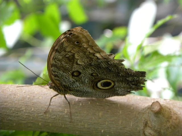 Butterfly Garden Artis