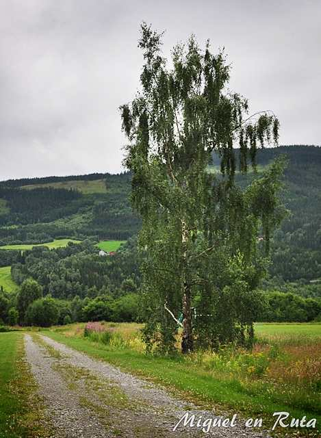 Sauce-Noruega