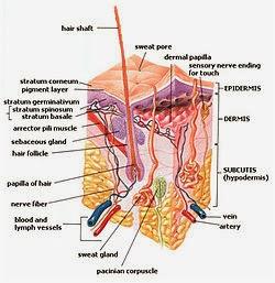 Jual Tabita Skin Care di Tabitawhiteningcream.com