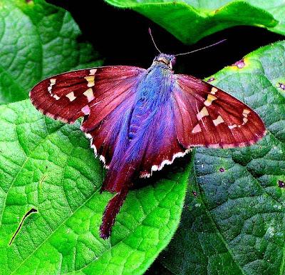 Foto: La mariposa más hermosa del mundo