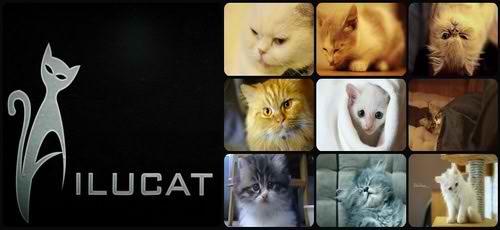 Ailu Cat House Cafe - Độc đáo cà phê Mèo ở Sài thành, địa điểm ăn uống 365
