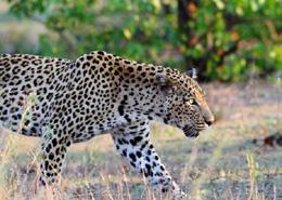 Nos convertimos en jaguares corriendo tras la borrachera, los problemas con el colegio de nuestro hijo y el viaje en un taxi sinisetro